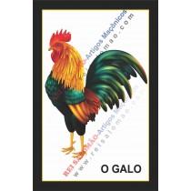 Galo Impresso